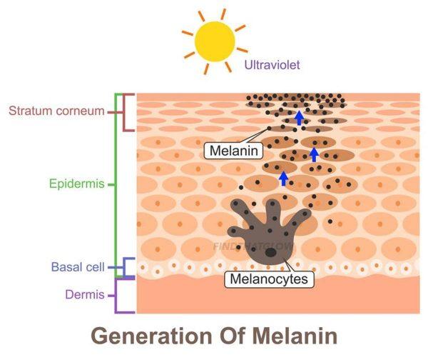 Generation of Melanin (From: 123rf)