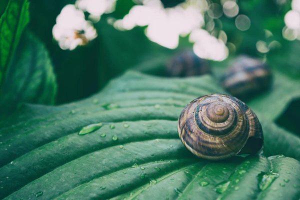 Snail on a leaf (From: Unsplash)