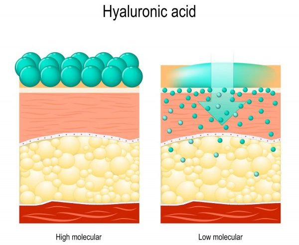 An illustration of the skin permeability of hyaluronic acid of different molecular weights. (From: 123rf.com)